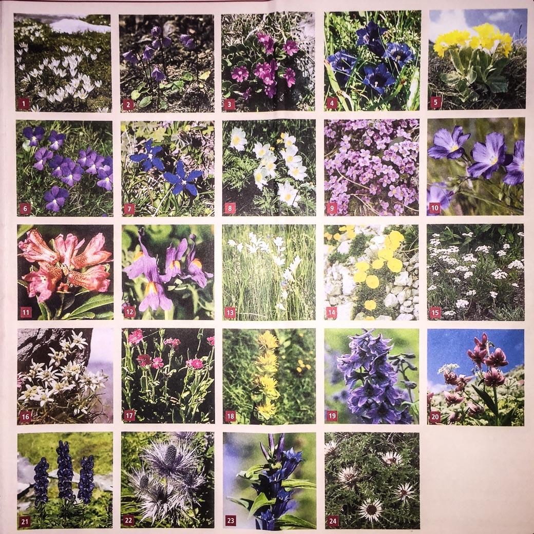 Flowers (83 of 2)
